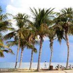 coconut01