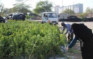 توزیع نهال رایگان در کیش در روز درختکاری