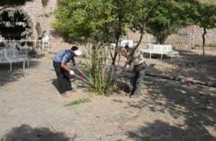 ممنوعیت هرس و قطع درختان جزیره کیش