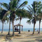 درختان نارگیل جزیره کیش