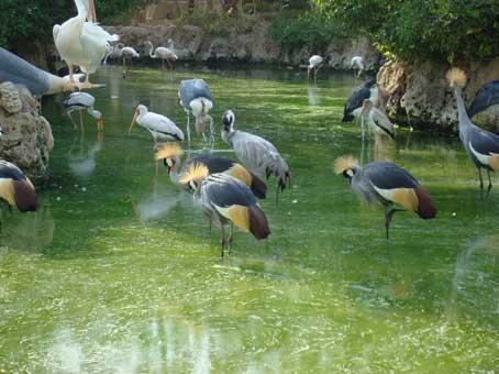 باغ پرندگان کیش