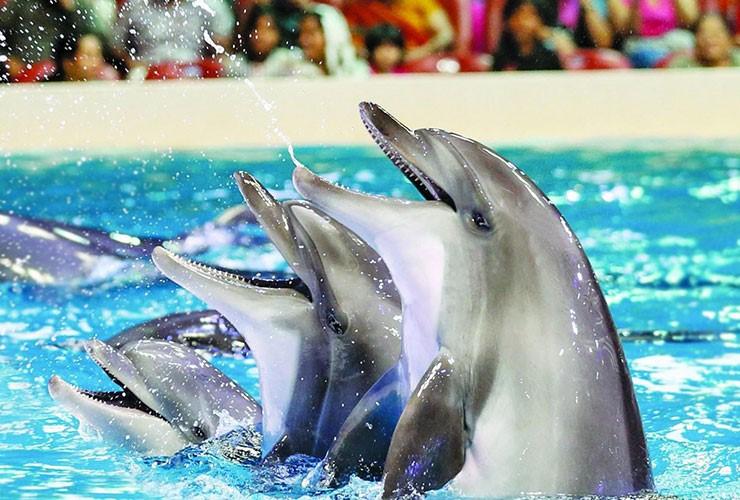 جاذبه های گردشگری کیش پارک دلفین